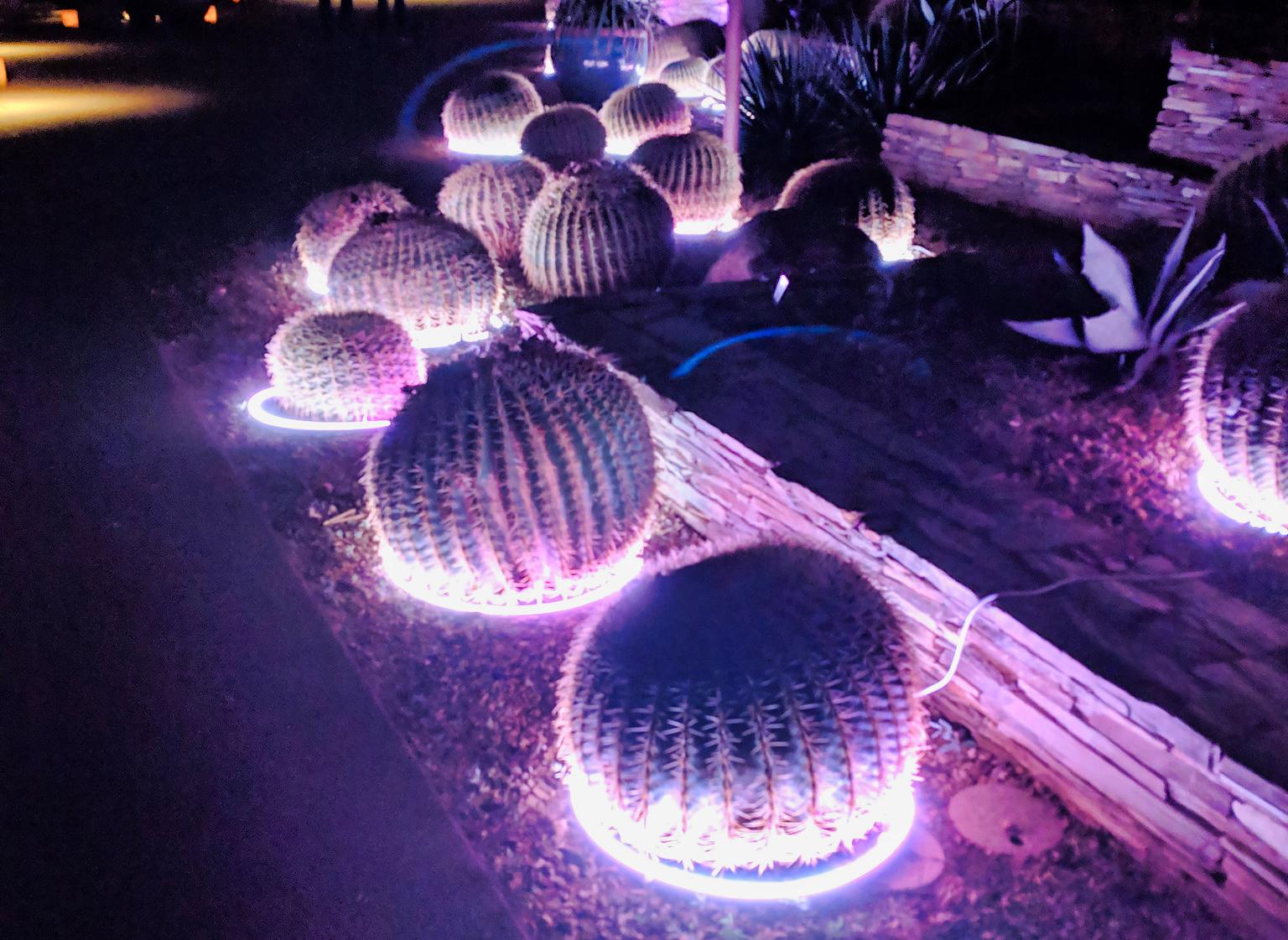 Las Noches de las Luminarias by Dale Cruse on Flickr_crop